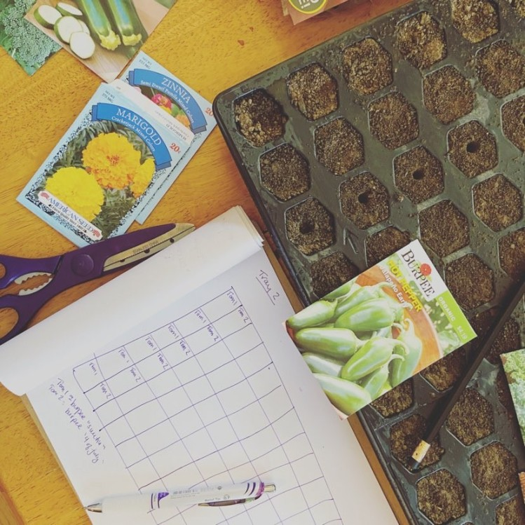 garden starter kit, plan, and seeds